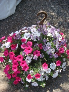 10 Inch Flowering Basket Summer Flowers ready to hang  in your yard