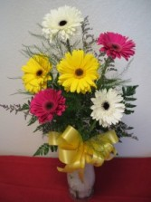 GERBERA DAISIES COLORS WILL BE ASSORTED