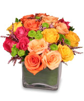 ENERGETIC ROSES Arrangement in Eau Claire, WI | 4 SEASONS FLORIST INC.