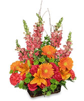 BRILLIANT BASKET Arrangement Best Seller in Tallahassee, FL | HILLY FIELDS FLORIST & GIFTS