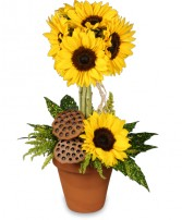 POT O' SUNFLOWERS Topiary Arrangement in Spanish Fork, UT | CARY'S DESIGNS FLORAL & GIFT SHOP