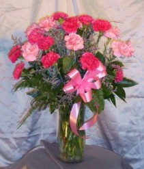 Dianthus Carnations In House Special Gift