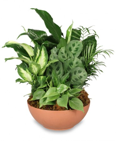 Gift of green dish garden of plants all house plants for Green plants for garden