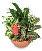 EUROPEAN DISH GARDEN Green & Blooming Plants in Advance, NC | ADVANCE FLORIST & GIFT BASKET