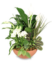BLOOMING DISH GARDEN Green & Blooming Plants in Eau Claire, WI | 4 SEASONS FLORIST INC.