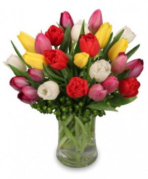 Tip Top Tulips Bouquet in Terre Haute, IN | BAESLER'S FLORAL MARKET