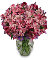 MAGENTA AGENDA Flower Arrangement in Hartville, OH | COUNTRY FLOWERS & HERBS