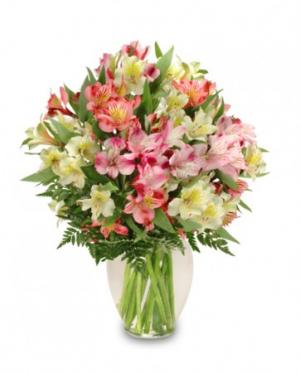 Alluring Alstroemeria Arrangement in Canon City, CO |