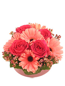 Bashful Blossoms Arrangement