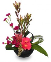 HI-STYLE D�COR Flower Arrangement in Tallahassee, FL | HILLY FIELDS FLORIST & GIFTS