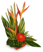 TROPICAL HEAT Arrangement in Red Deer, AB | SOMETHING COUNTRY FLOWERS & GIFTS