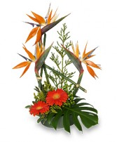 ISLAND INFLUENCED Arrangement in Edgewood, MD | EDGEWOOD FLORIST & GIFTS