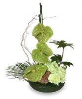 SEA OF GREEN Floral Arrangement in Edgewood, MD | EDGEWOOD FLORIST & GIFTS