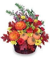 PUMPKIN PLEASURES Basket of Flowers