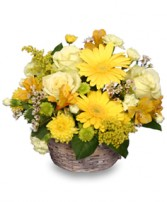 SUNNY FLOWER PATCH in a Basket in Milton, MA | MILTON FLOWER SHOP, INC