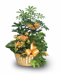 EUROPEAN GARDEN Assorted Plant Basket in Canon City, CO |