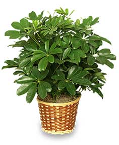 Images of tropical house plants