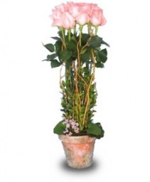 ROSE GARDEN TOPIARY Pale Peach or Pink Roses