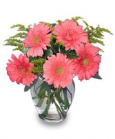 DAISY'S DELIGHT   Pink Gerberas in Kansas City, MO | SHACKELFORD BOTANICAL DESIGNS