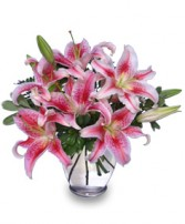STUNNING STARGAZERS  Arrangement in Plymouth, MA | CAROLE'S FLOWERS AND GIFTS