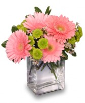 FRUIT SORBET Gerbera Bouquet in Bath, NY | VAN SCOTER FLORISTS 