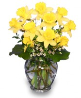 HERE COMES THE SUN Bouquet of Daffodils in Greenville, OH | HELEN'S FLOWERS & GIFTS