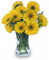 HELLO SUNSHINE! Vase of Flowers in Bath, NY | VAN SCOTER FLORISTS 
