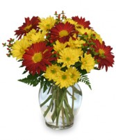 RED ROVER & YELLOW DAISY  Bouquet of Flowers in Springfield, MA | REFLECTIVE-U  FLOWERS & GIFTS