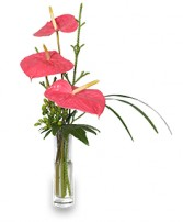BEYOND A BUD VASE Arrangement in Martinsburg, WV | FLOWERS UNLIMITED