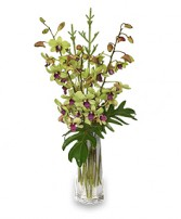 DIVINE DENDROBIUMS Vase of Orchids in Peru, NY | APPLE BLOSSOM FLORIST