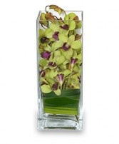 LIVELY LIME GREEN Orchid Arrangement in Mississauga, ON | FLORAL GLOW - CDNB DIVINE GLOW INC BY CORA BRYCE