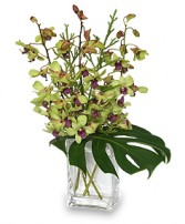 OUT OF THIS WORLD Orchid Arrangement in Meadow Lake, SK | FLOWER ELEGANCE