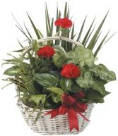 A BEAUTIFUL BASKET in Bethesda, MD | ARIEL FLORIST & GIFT BASKETS