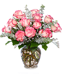 A DAZZLING DOZEN Pink Bi-Colored Roses