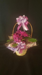 African Violet in a Basket~ (Colors may vary) Plant