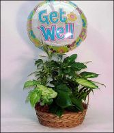 Plant Basket with Get Well Mylar Balloon