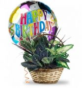 Plant Basket with Mylar Balloon