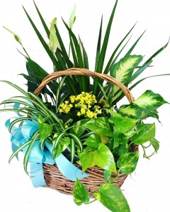 Big Plant with Flowers  3C Floral Collection