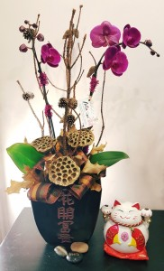 Chinese Lucky Orchid arrangement plants