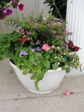 Combination Hanging Baskets Outdoor Plants in Lima, OH | THE FLOWERLOFT