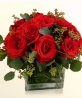 Compact  Roses