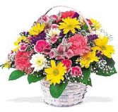 DAISIES AND MORE in Edison, NJ | E&E FLOWERS AND GIFTS