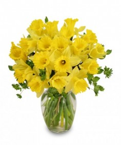 Dancing Daffodils in Season  *availability may be limited