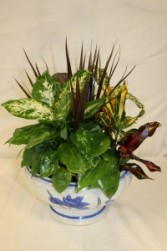 DISH GARDEN IN CERAMIC CONTAINER in Edison, NJ | E&E FLOWERS AND GIFTS