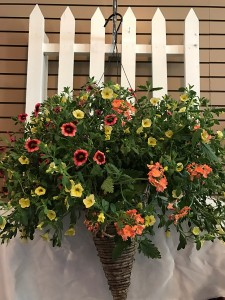 Deluxe Hanging Basket Blooming Plant in Vienna, WV | FOX'S FLORAL AND GIFTS