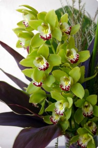 Tropical Cymbidium Vase Arrangement in Toronto, ON | BOTANY FLORAL STUDIO
