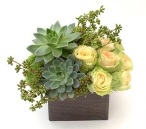 Elegant Complement Design Flower and Succulent Arrangement in Burbank, CA | LA BELLA FLOWER & GIFT SHOP