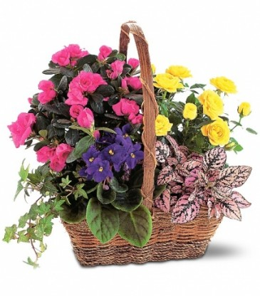 Plants Modern/Tropical Designs Gift Baskets Gift Items Wedding Flowers ...