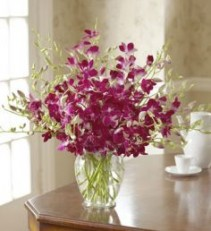 Exotic Breez Orchids Make Their Day Unforgettable