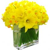 FIRST SIGNS OF SPRING  BOUQUET in Bethesda, MD | ARIEL FLORIST & GIFT BASKETS
